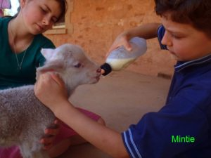 Mintie learning to drink from a bottle