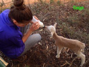 Sage being fed